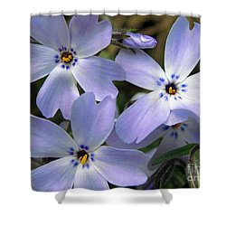 Shower Curtain featuring the photograph Creeping Phlox by J McCombie