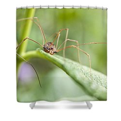 Shower Curtain featuring the photograph Creepy Crawly Spider by Jeannette Hunt