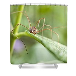 Creepy Crawly Spider Shower Curtain