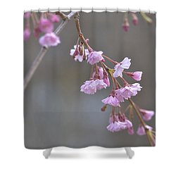 Crepe Myrtle Shower Curtain by Lisa Phillips