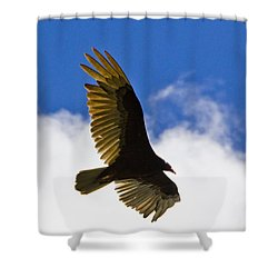 Crested Caracara Shower Curtain by Roger Wedegis