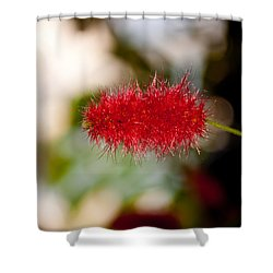 Shower Curtain featuring the photograph Crimson Bottle Brush by Tikvah's Hope