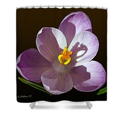 Crocus In Full Bloom Shower Curtain by Brian Wallace
