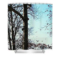 Shower Curtain featuring the photograph Crows In For Landing by Pamela Hyde Wilson