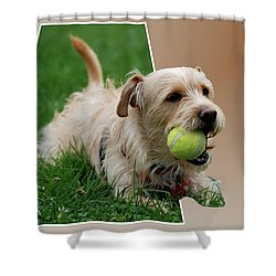 Shower Curtain featuring the photograph Cruz My Ball by Thomas Woolworth