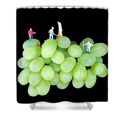 Cultivation On Grapes Shower Curtain by Paul Ge