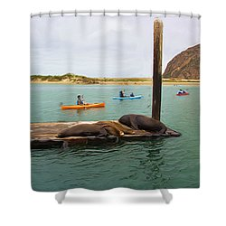 Curious About Sea Lions Shower Curtain by Heidi Smith