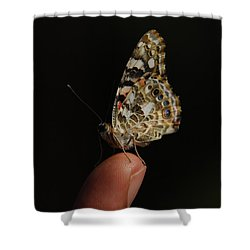 Shower Curtain featuring the photograph Curious Butterfly by Tam Ryan