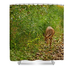 Curious Doe 9838 Shower Curtain by Michael Peychich