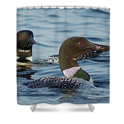 Curious Loons Shower Curtain