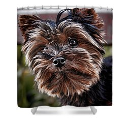 Curious Yorkshire Terrier Shower Curtain by Mariola Bitner