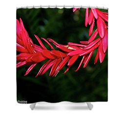 Shower Curtain featuring the photograph Curve Straight Ahead by Rachel Cohen