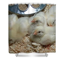 Shower Curtain featuring the photograph Cute And Fuzzy Chicks by Chalet Roome-Rigdon