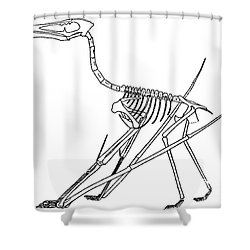 Cycnorhamphus Suevicus Shower Curtain by Science Source