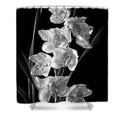 Shower Curtain featuring the photograph Cymbidium Cluster In Black And White by Endre Balogh