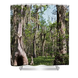 Cypress Trees And Water Hyacinth In Lake Martin Shower Curtain by Louise Heusinkveld