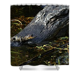Daddy Alligator And His Baby Shower Curtain by Sabrina L Ryan