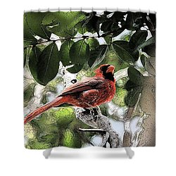 Shower Curtain featuring the photograph Daddy Cardinal by Donna G Smith