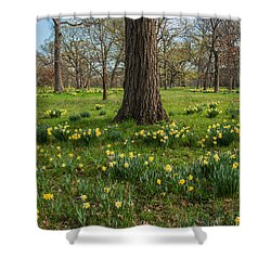 Daffodil Glade Number 2 Shower Curtain by Steve Gadomski