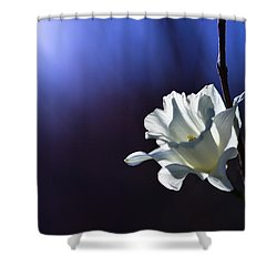 Daffodil Light Shower Curtain