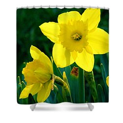 Shower Curtain featuring the photograph Daffodils by Sherman Perry