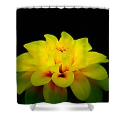 Shower Curtain featuring the photograph Dahlia Delight by Jeanette C Landstrom