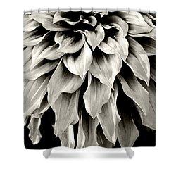 Dahlia Flower  Shower Curtain by Sumit Mehndiratta