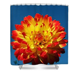 Dahlia 'procyon' Shower Curtain by Ian Gowland and Photo Researchers