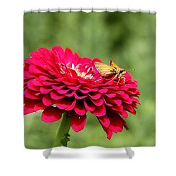 Shower Curtain featuring the photograph Dahlia's Moth by Elizabeth Winter