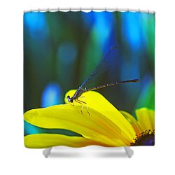 Daisy And Dragonfly Shower Curtain by Kay Lovingood