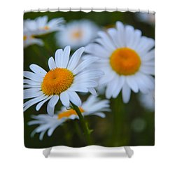 Shower Curtain featuring the photograph Daisy by Athena Mckinzie