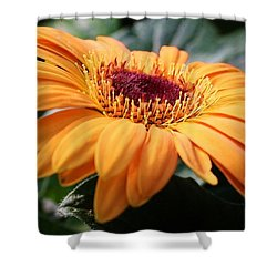 Daisy Delight Shower Curtain by Bruce Bley