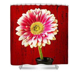 Daisy In Black Vase Shower Curtain by Garry Gay