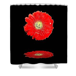 Shower Curtain featuring the photograph Daisy Reflection by Carolyn Repka
