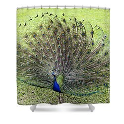 Dance With Me Shower Curtain by Teresa Zieba