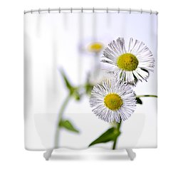 Dancing Daisy Shower Curtain by LeeAnn McLaneGoetz McLaneGoetzStudioLLCcom
