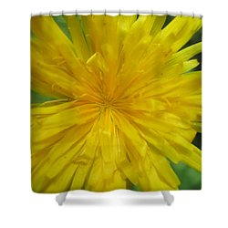 Shower Curtain featuring the photograph Dandelion Close Up by Kym Backland