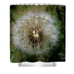 Shower Curtain featuring the photograph Dandelion Going To Seed by Sherman Perry
