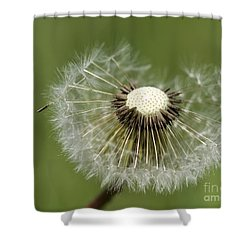 Dandelion Half Gone Shower Curtain by Teresa Zieba