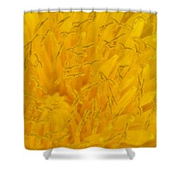 Dandelion Up Close Shower Curtain