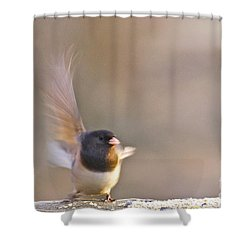 Dark-eyed Junco Taking Flight Shower Curtain by Sean Griffin