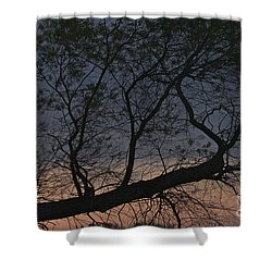 Shower Curtain featuring the photograph Dawn by William Norton