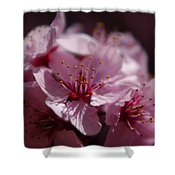 Day Dreaming In Pink Shower Curtain