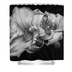 Day Lilies Shower Curtain by Eunice Gibb