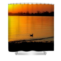 Day Settling Shower Curtain by Karol Livote