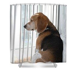 Daydreaming Shower Curtain by Jennifer Ancker