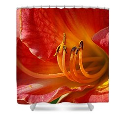 Daylilly Close Up Shower Curtain by Randy J Heath