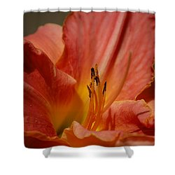 Daylilly Shower Curtain by Randy J Heath