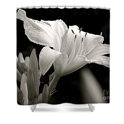 Daylily Study In Bw Iv Shower Curtain