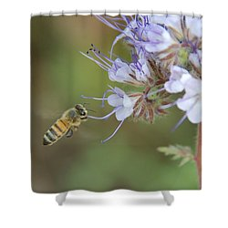 Shower Curtain featuring the photograph Dbg 041012-0310 by Tam Ryan